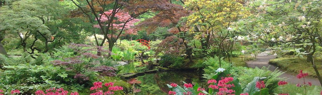 japanse-tuin-praktijk-de-cirkel-den-haag-rijswijk