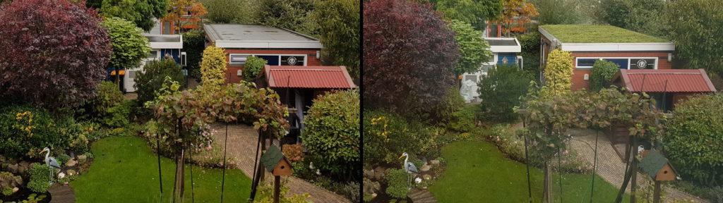 Voor en na foto van sedumdak praktijk